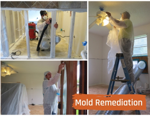 2018.09.11 Mold Remediation Addie Collage with title.jpg